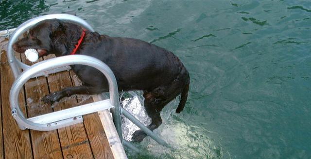 Flotation Systems AquaStair Dog Ladder